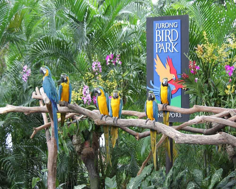 Dining Jurong Bird Park