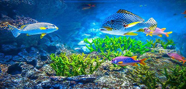 sea-aquarium