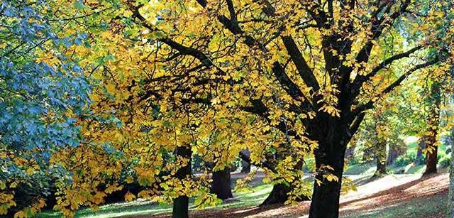 chestnut-nature-park