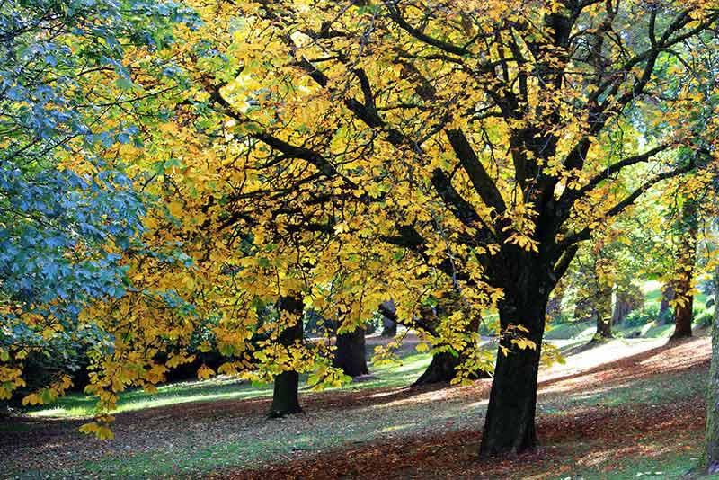 Chestnut Nature Park Image