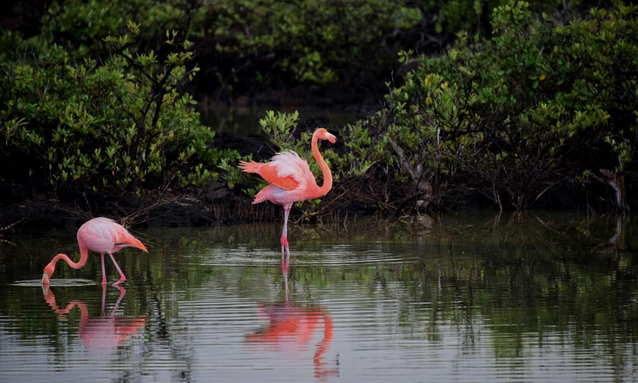 Kranji Marshes Image