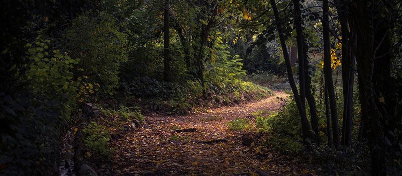 macritchie-nature-trail-image