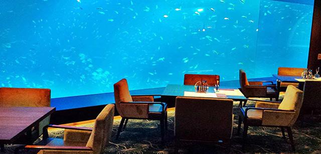 ocean-restaurant-cat-cora