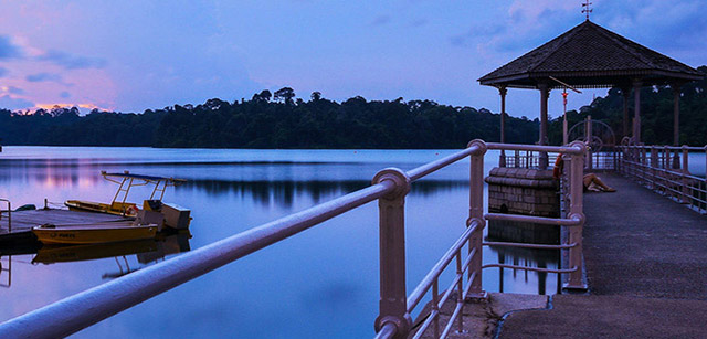 MacRitchie-Reservoir-Park